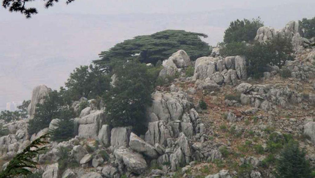 France Liban Soutien à l'Enfance - Le Liban